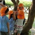 【たんぽぽ組】バス散歩で木登りしたよ!