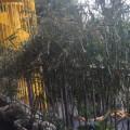 笹の葉を頂きました!