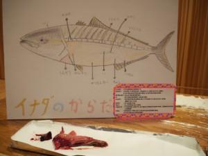 魚のさばきHP用_6958
