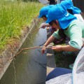 【ひまわり組】伊佐沼公園でザリガニをたっくさん釣ったよ!