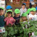 夏野菜の苗を買いに行ったよ♪