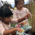 【食育】バケツで育てた稲を刈ったよ!